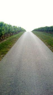 vineyards..