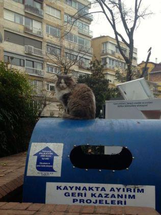the boss-cat
