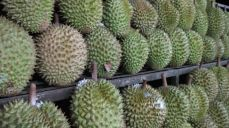 Durian road stop